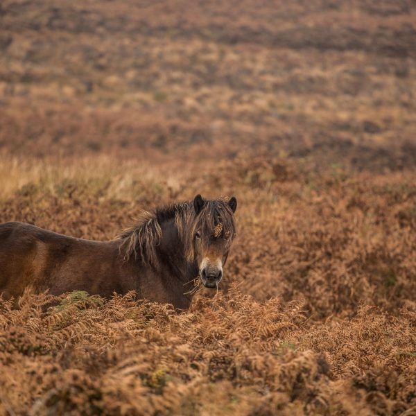 Exmoor_landscape_photography-14