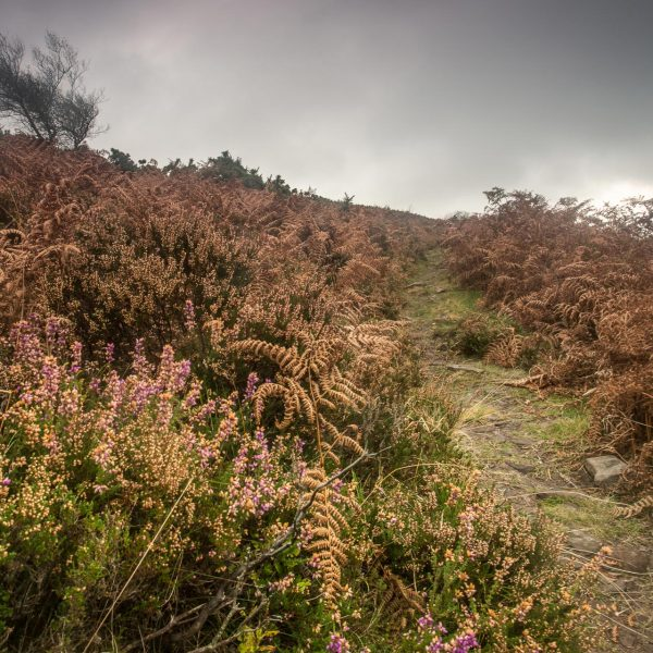 Exmoor_landscape_photography-22