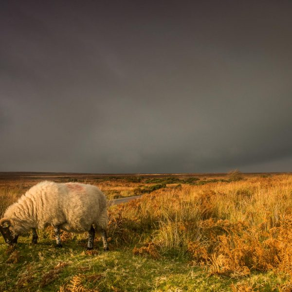 Exmoor_landscape_photography-24