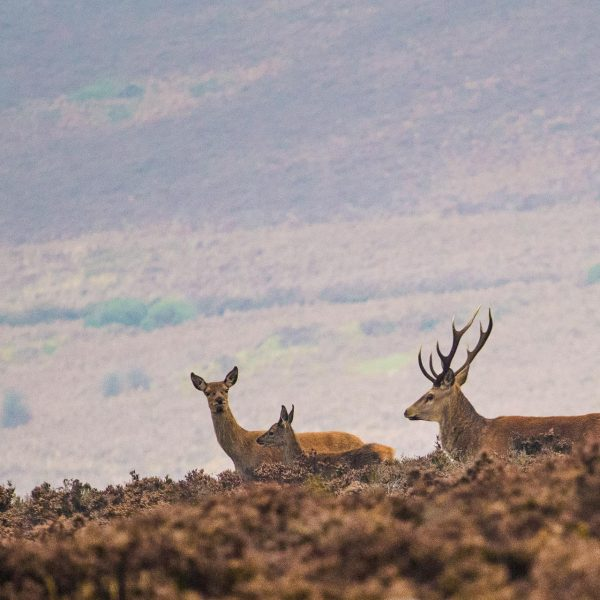 Exmoor_landscape_photography-30