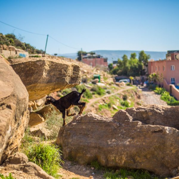 morroco_travel-photography-7