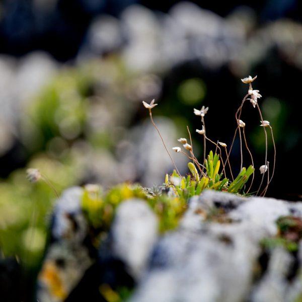 woolacombe_landscapes-13